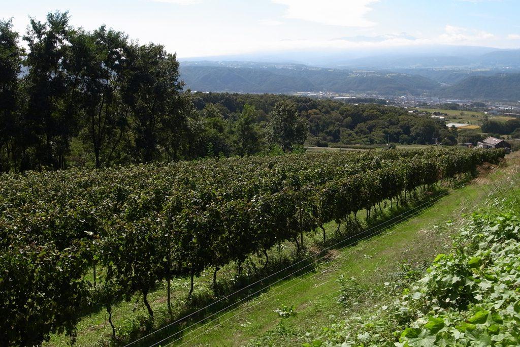 東御市内のワインブドウ畑